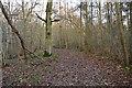 TQ1937 : Sussex Border Path, Horsegills Wood by N Chadwick