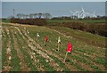 TA1452 : Field near Dunnington, E Yorks by Paul Harrop