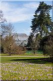 TQ1876 : Crocuses at Kew by Ian Capper