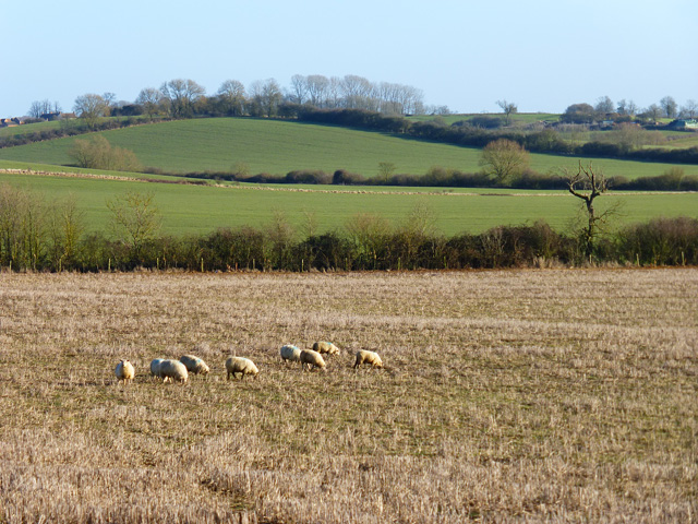 Farmland, Dunton