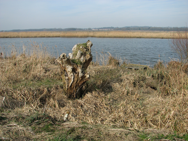 View across the River Yare