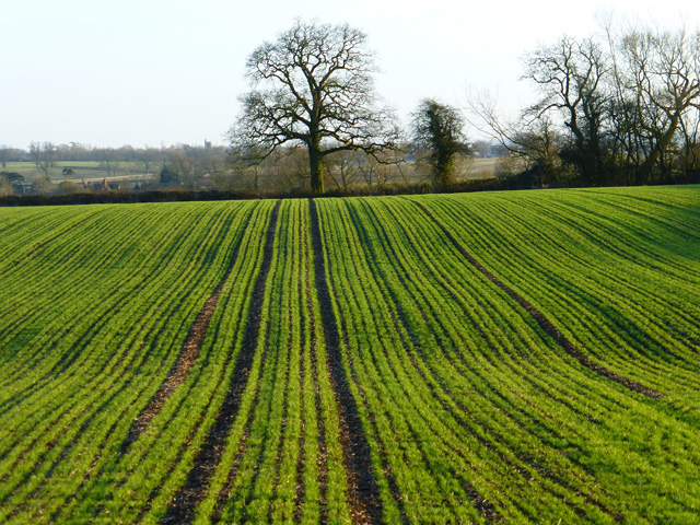 Farmland, Aston Abbotts