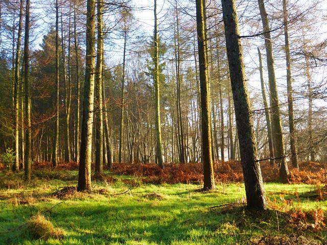 Woodland, Great Hampden