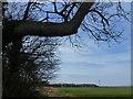 TF9026 : Near Long Belt on Beacon Hill by Richard Humphrey