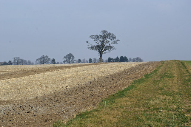 Ploughing Patterns near Hall Top