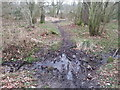 NY9367 : Footpath in East Wood by Clive Nicholson