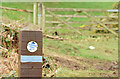J3370 : Running trail waymark, Lagan Meadows, Belfast (March 2015) by Albert Bridge