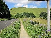 SK1482 : Cranesbill by the roadside by Derek Harper