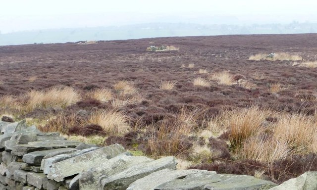 Line of grouse butts, Askwith Moor