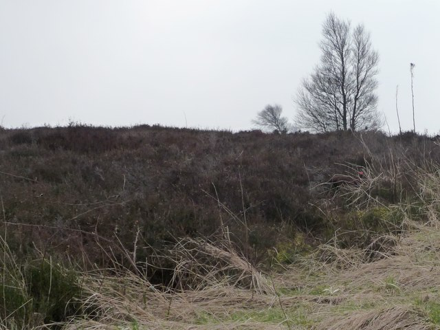 Open access moorland, east of Snowden Carr Road