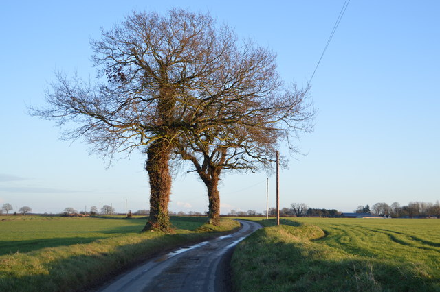 Two trees by the lane