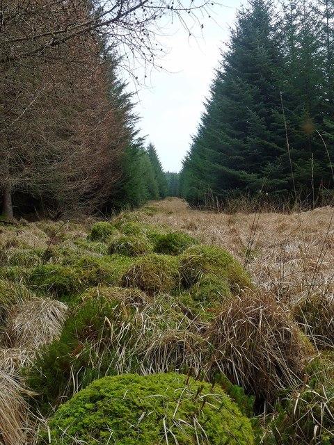 Forest ride near Whitehouse, Argyll