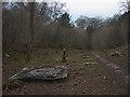 SD4777 : Scrub clearance at Gait Barrows NNR by Karl and Ali