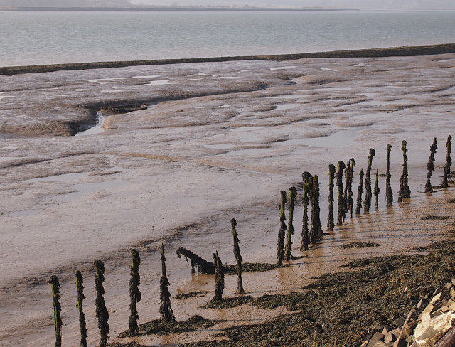 Seaweed-covered stumps in Orwell