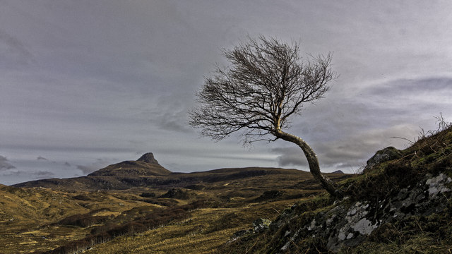 Lone tree amidst Inverpolly
