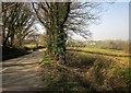 SX2886 : Road to Egloskerry by Derek Harper