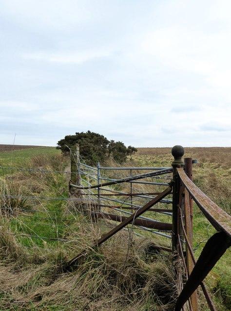 Fencing near Cameron Reservoir path