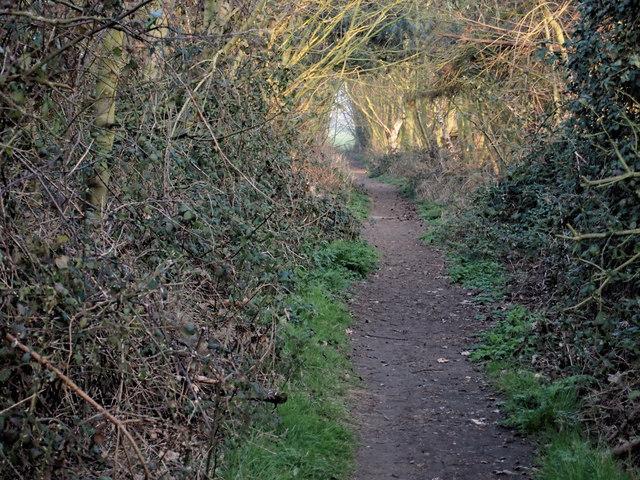 Finger Bread Hill Path