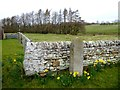 NZ0585 : Millennium stone, Middleton by Oliver Dixon