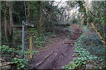 SX9364 : Southwest Coast Path from Anstey's Cove Road by Ian S