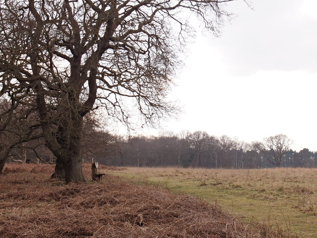 Seat looking over farmland in Captain's Wood