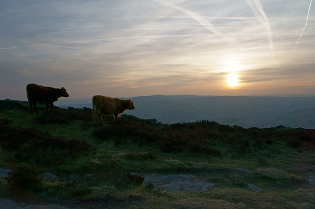 Highland cattle on the edge