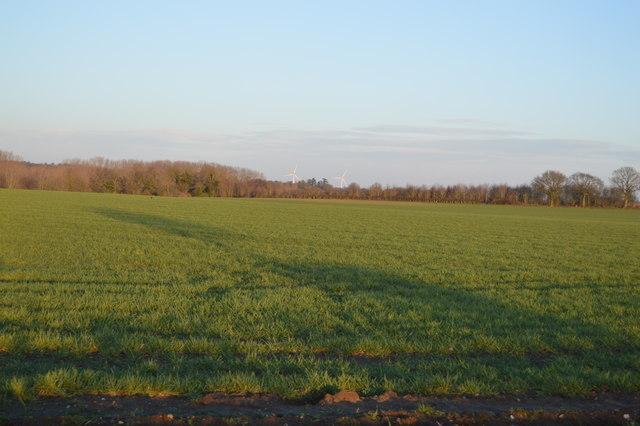A Norfolk field