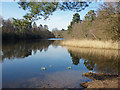 SU9869 : Virginia Water, Windsor Great Park by Alan Hunt