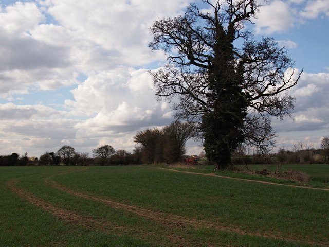 Hedgerow and field, Ipswich Northern Fringe