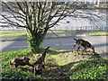 NZ2463 : Goats, Pipewellgate, NE8 (4) by Mike Quinn