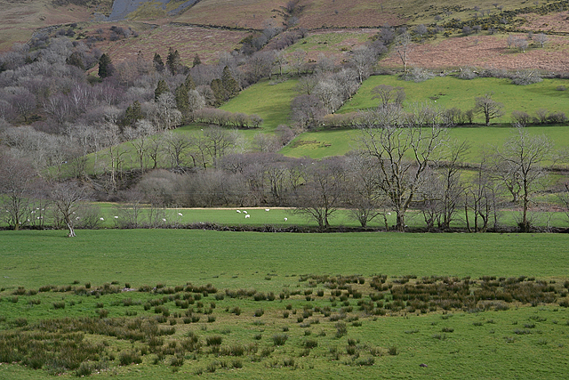 The Dovey valley south of Llanymawddwy