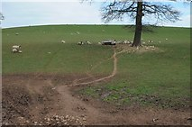 SO7030 : Ewes and lambs near Boyce Court by Philip Halling