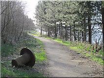NZ2462 : A Riverside Rivet by a path in Gateshead Riverside Park by Mike Quinn
