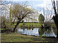 TL4550 : Little Shelford: early spring at Bradmere Pond by John Sutton