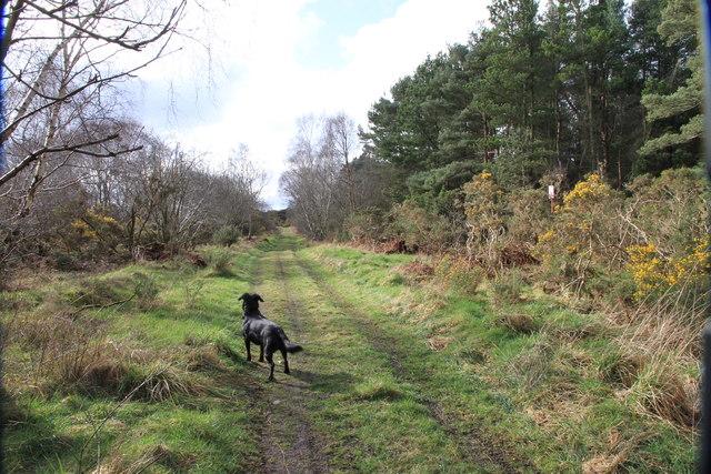 Track Avoiding the Rifle Range at Binn Hill
