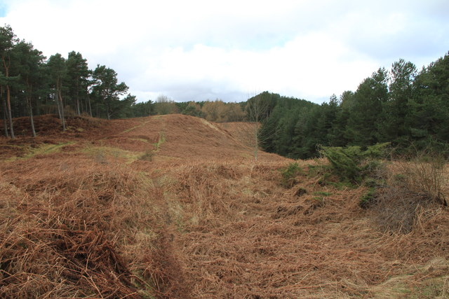 A clearing in the woods on Binn Hill