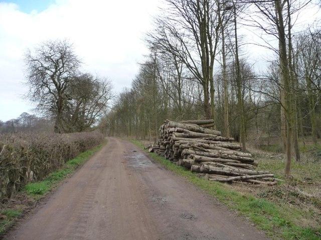 Log pile alongside Parlington Lane