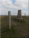 ST8412 : Iwerne Courtney: trig point and signpost on Hambledon Hill by Chris Downer
