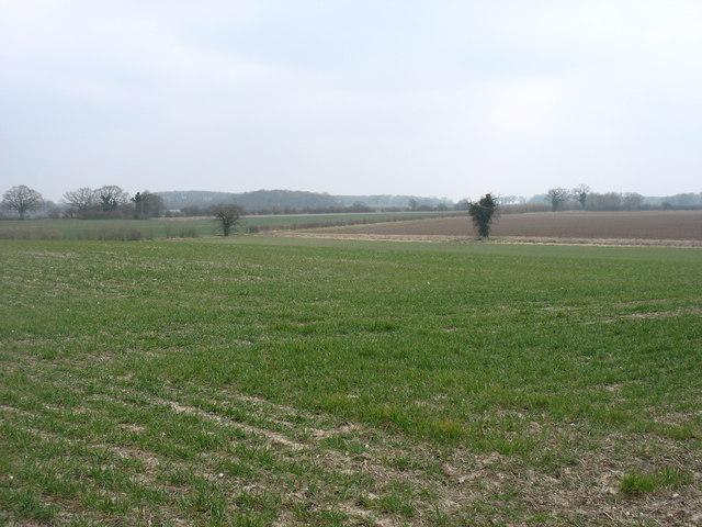 Farmland near Hales Hall