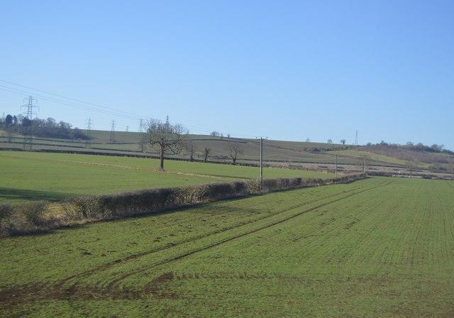 Rutland hedge