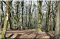 J4577 : Deciduous trees, Cairn Wood, Craigantlet (March 2015) by Albert Bridge
