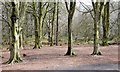 J4577 : Path and trees, Cairn Wood, Craigantlet - March 2015(2) by Albert Bridge