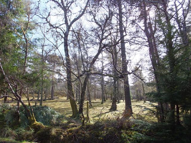 Woodland at Craigbreck