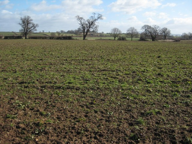 Meadowland near Upton-upon-Severn