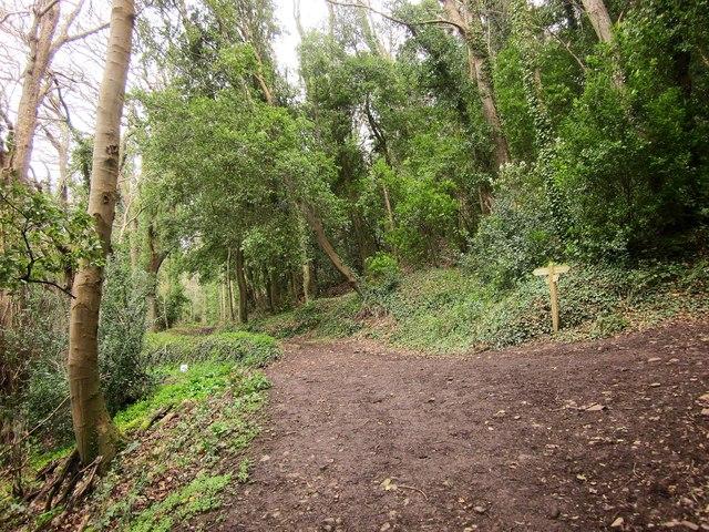Path junction, Allerford Plantation