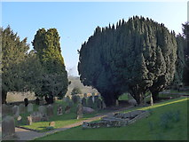 TQ3632 : St Margaret, West Hoathly: churchyard (VI) by Basher Eyre
