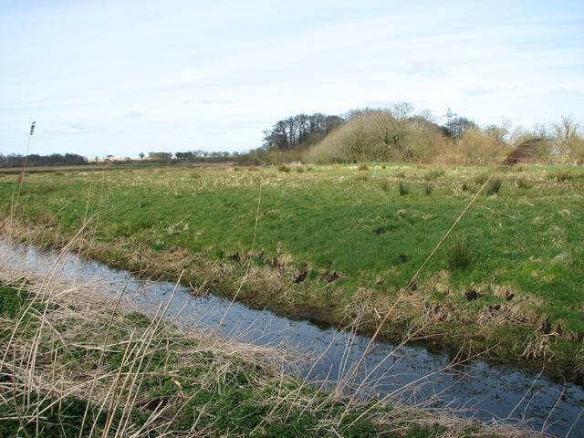 Pastures by Little Church Farm