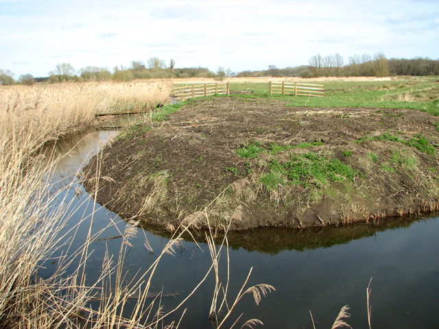 Marsh pasture south of the River Chet