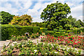 TQ4666 : Rose Garden, Priory Gardens by Ian Capper