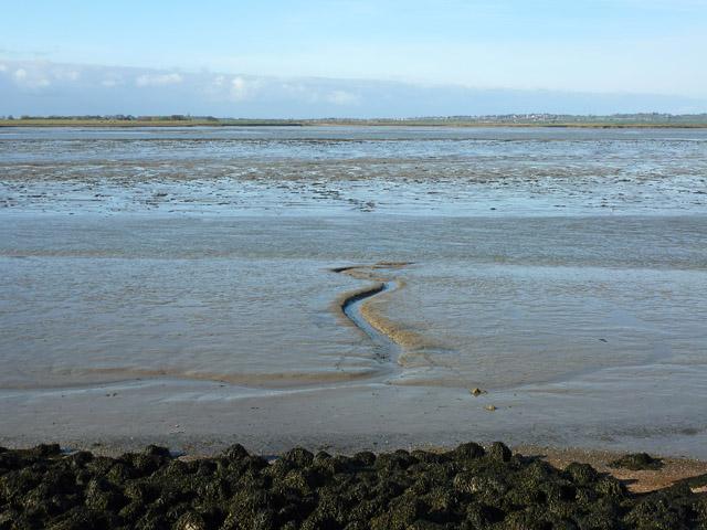 Swale mud